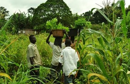 Ghana youth advised on negative perception about agriculture business