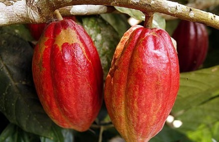 Ghana introduces electronic payment system for Cocoa farmers