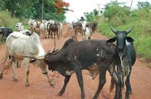 Provide livestock corridors to check influx of foreign animals – Veterinary Officer
