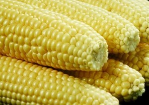 World Food Programme partners CRI to produce new maize varieties