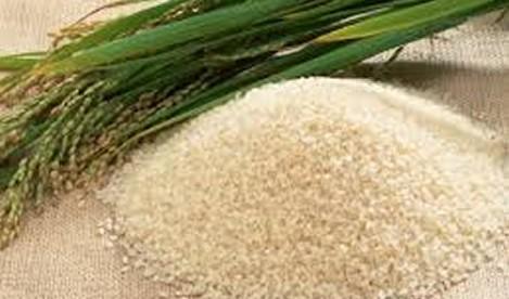 Rice farmers in Bontanga and Golinga double yields