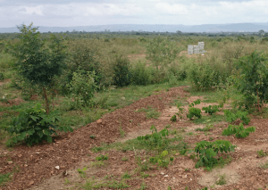 Natural regeneration, best method to restore land – World Vision