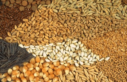 New association formed in seed industry