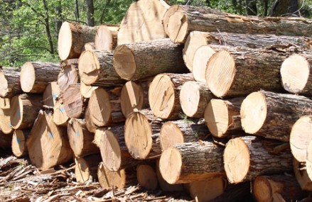 Ghana exports €72.7m worth of wood products, Asia is biggest market