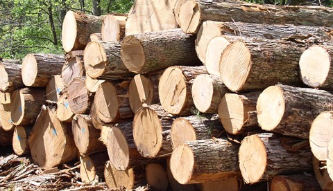 Illegal timber logging threatening Ghana's water sources