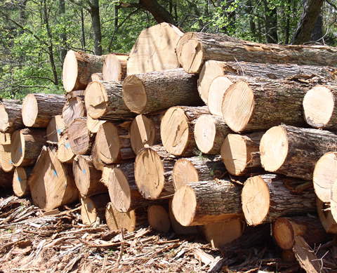 Ghana exports €72 7m worth of wood products, Asia is biggest