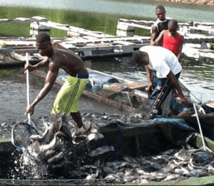 We need a marine bank – Tema fisher folks appeal to government