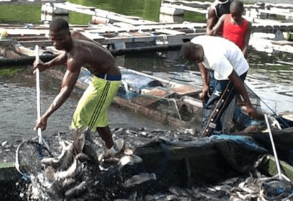 Lake Volta zoned to boost aquaculture in Ghana