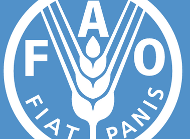 Food shortage in the Sahel imminent – FAO