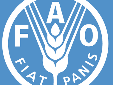 FAO calls for resilient rural households to stem migration
