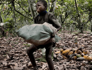 COCOBOD steps up efforts to address child labour in cocoa communities