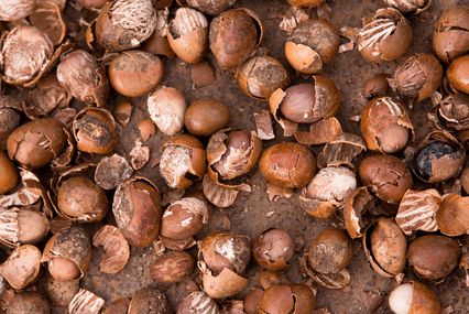 Shea not supporting sustainable poverty reduction – Study