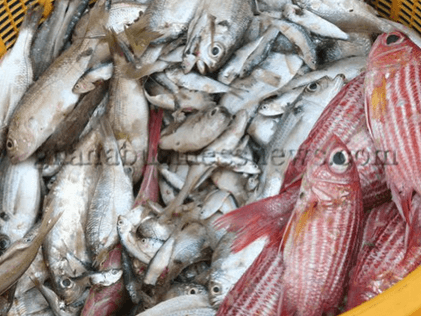 Removal of EU fish export ban on Ghana should lead to enforcing laws