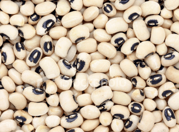 USAID sponsored cowpea seed improvement project begins