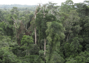 Dismiss case of CSOs against government over Atewa Forest – Attorney-General