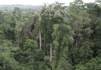Ghana's forest reserves under threat