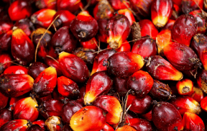 BOPP records growth in palm fruits processing