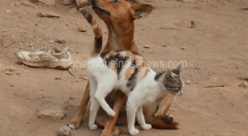 Animal tuberculosis – A looming threat to public health
