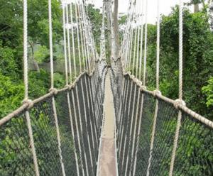 Bunso Canopy Walkway