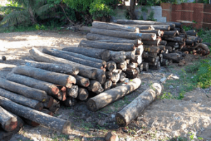 Government initiates two approaches to combat illegal logging