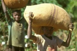 Parents asked to stop using children on cocoa farms