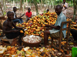 Don't leave out cocoa farmers in decision making – WCFO