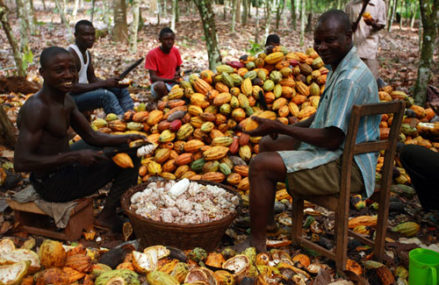 Cocoa farmers call for pension scheme