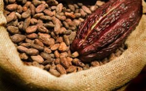 Government increases cocoa price by 8.42 per cent