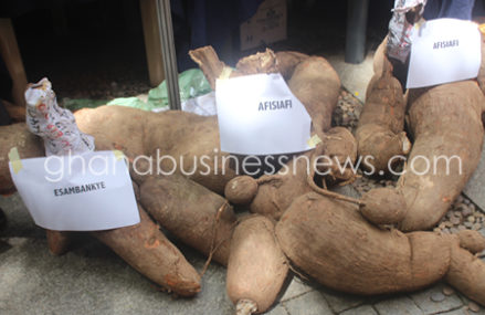 Volta Region is becoming cassava processing hub