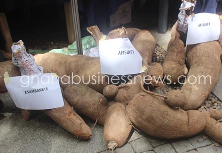 Volta Region is becoming cassava processing hub - Ghana
