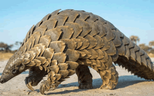 Nigerian customs seize huge haul of endangered wild animal parts