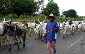 Tension mounts at Nkudwua following invasion of herdsmen