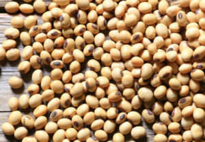 US soybeans, grains rally over China trade optimism, export data