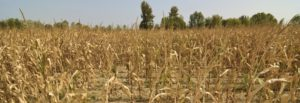 AU Commission backs climate change resilience agriculture