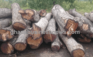 NGOs to intensify advocacy against rosewood felling