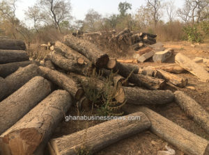 No evidence of corruption found against officials in illegal rosewood logging – Committee