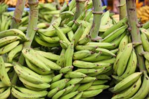 Asante-Akim North makes money from plantain exports